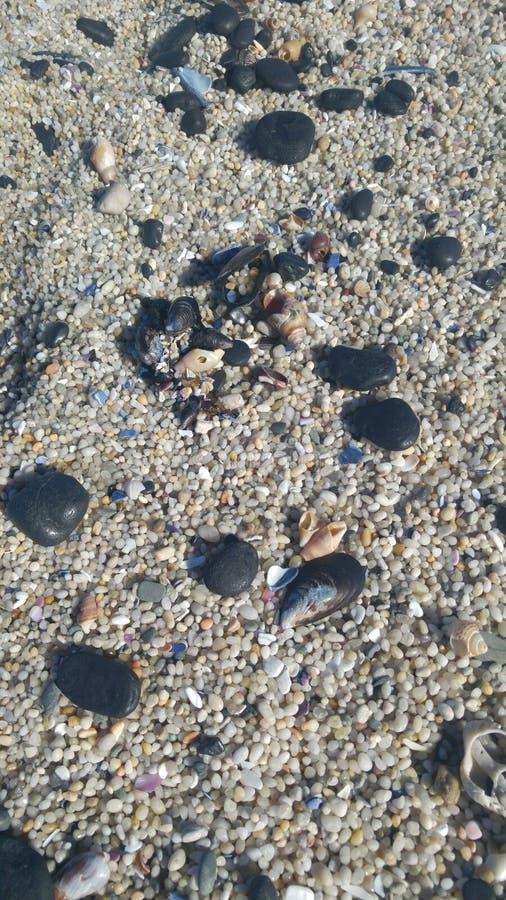 Cailloux et coquilles de plage image libre de droits