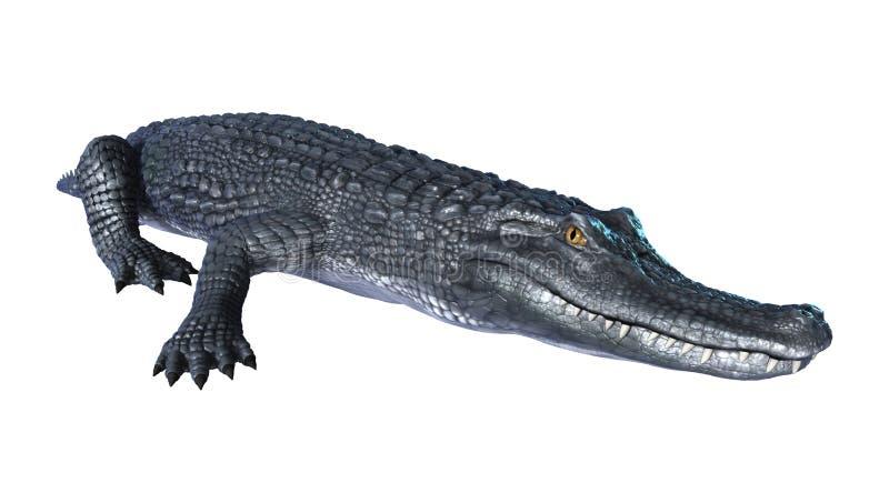 caimán del cocodrilo de la representación 3D en blanco stock de ilustración
