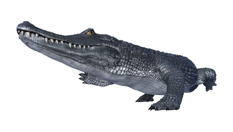 caimán del cocodrilo de la representación 3D en blanco libre illustration