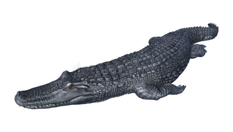 caimán del cocodrilo de la representación 3D en blanco ilustración del vector