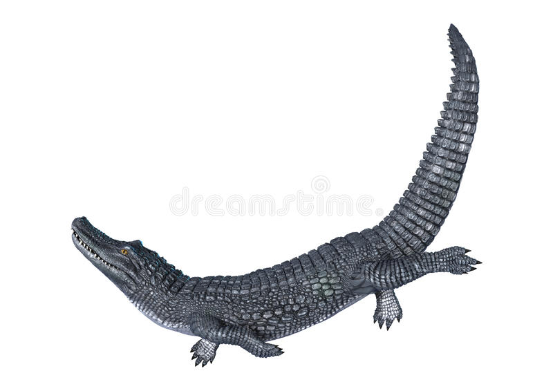 Caiman stock illustration