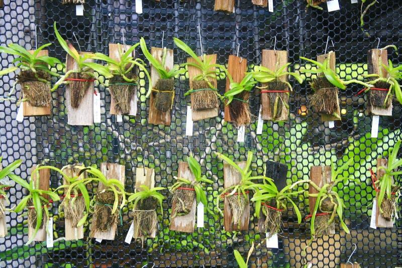 Cair pequeno das orquídeas na rede fotos de stock