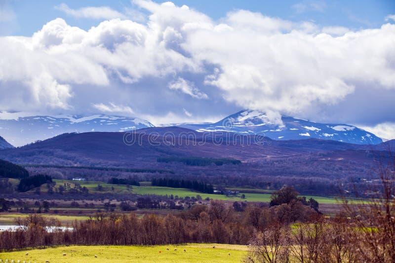 Cairgorm山和高原的宏伟的视图在苏格兰 从Kincraig的看法 免版税库存照片