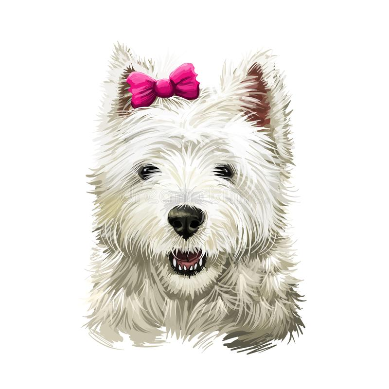 Cairn Terrier dog breed isolated on white digital art illustration. Old terrier breeds, originating in the Scottish Highlands,. Working dogs. Cairn function was royalty free illustration