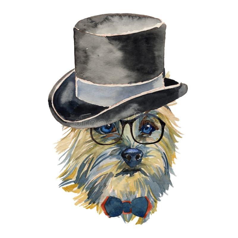 Cairn Terrier - portra isolato realistico del cane dei pantaloni a vita bassa dell'acquerello illustrazione vettoriale
