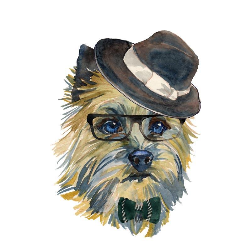 Cairn Terrier - portra isolato realistico del cane dei pantaloni a vita bassa dell'acquerello illustrazione di stock