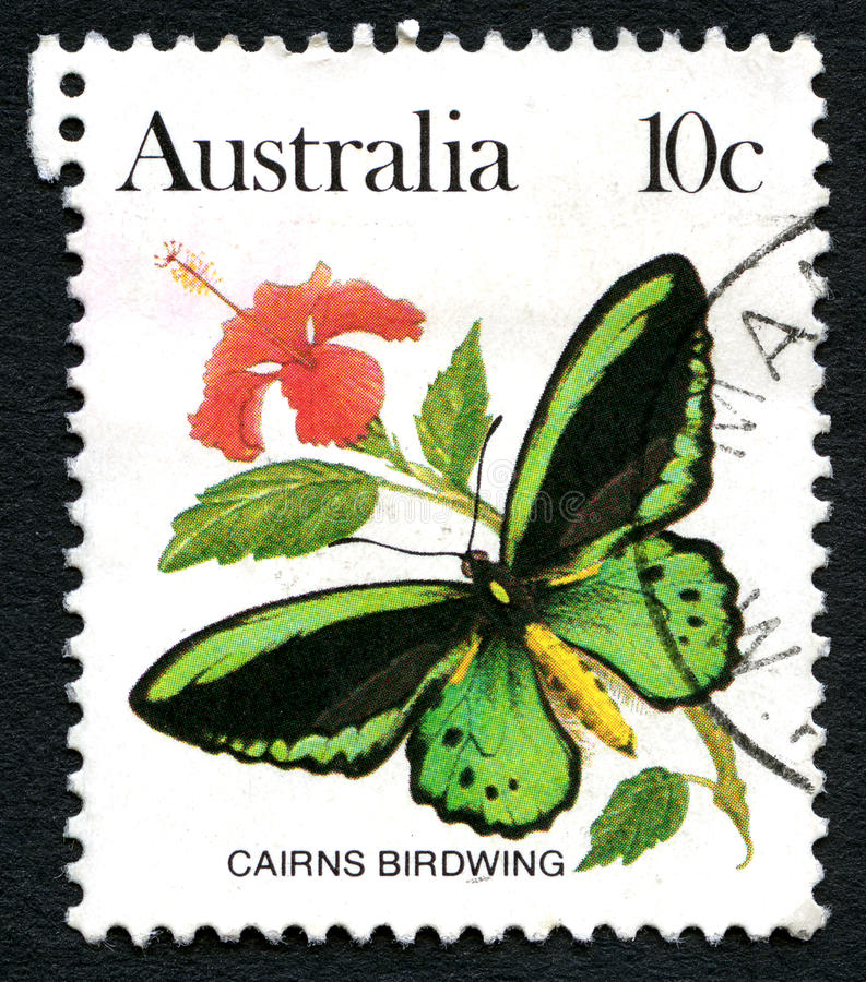Cairns Birdwing Butterfly Australian Postage Stamp. AUSTRALIA - CIRCA 1983: A used postage stamp from Australia, depicting an illustration of a Cairns Birdwing stock photo