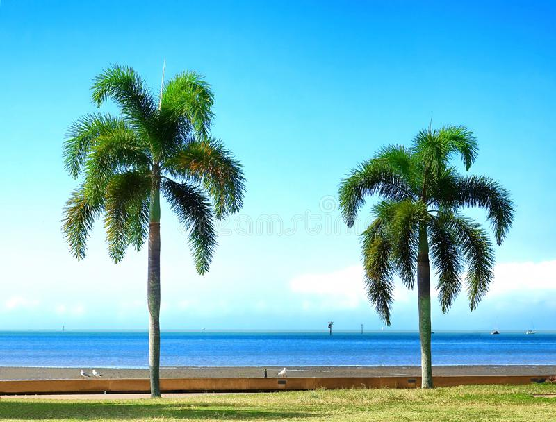 Cairns, two palm trees along the beach. stock images