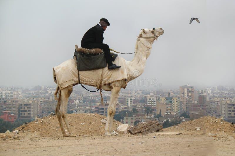 cairo Valle Egitto di Giza 5 gennaio 2008: la polizia equipaggia si siede sul cammello, città di Il Cairo è sui precedenti fotografia stock libera da diritti
