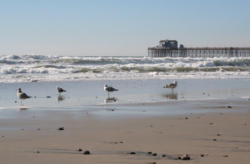 Cais do perto do oceano, Ca imagem de stock