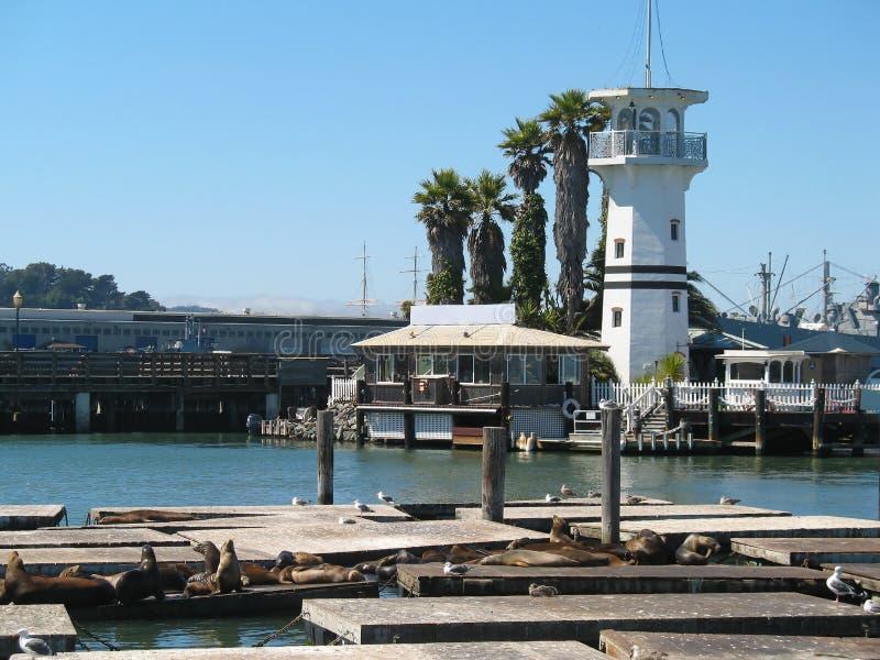 Cais 39 e um farol, San Francisco, Califórnia, Estados Unidos da América Leões de mar que descansam nas plataformas fotografia de stock royalty free