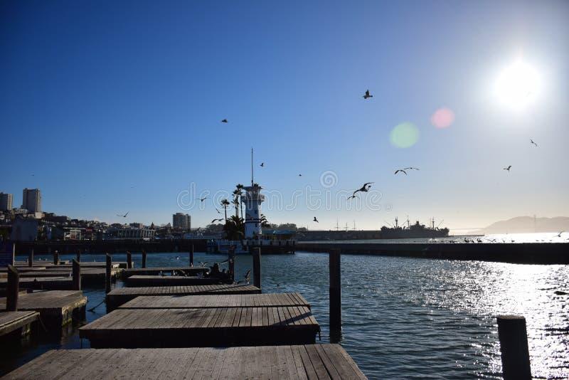 Cais 39 em San Francisco durante Sunny Cloudless Day com selos e gaivotas fotografia de stock royalty free