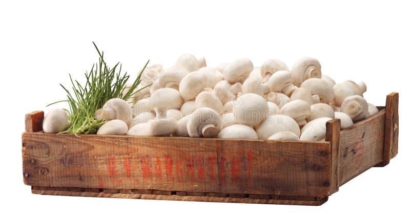 Caisse de champignon de couche blanc frais image libre de droits