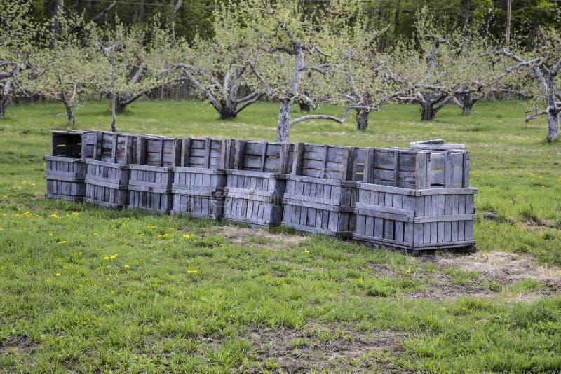 Caisses de fruit dans un champ de pommiers photo stock