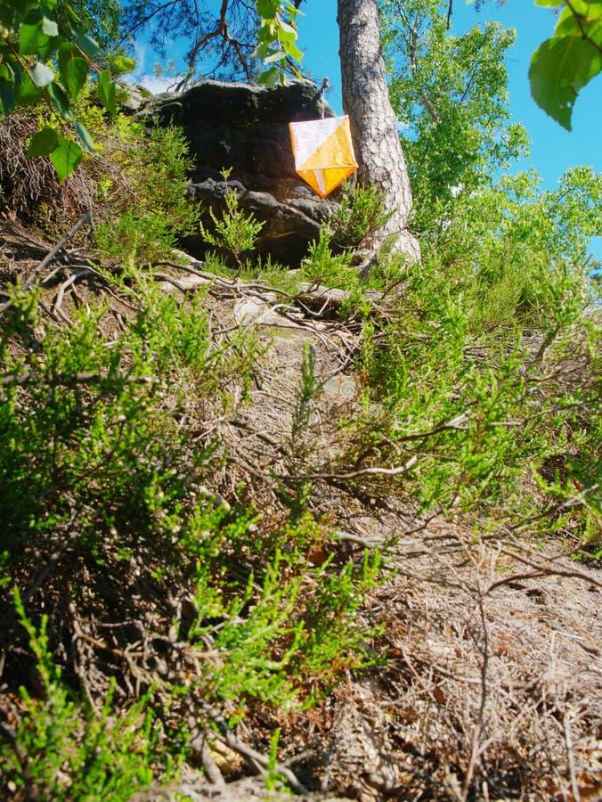 Caixa branca alaranjada de Orienteering exterior no esporte popular da floresta fotos de stock