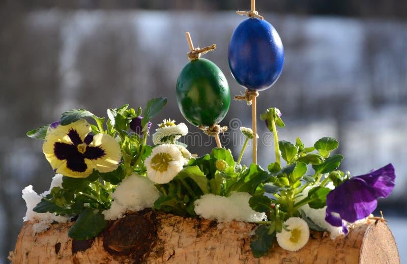 Caixa coberto de neve da Páscoa com amor perfeito, ovos e margarida fotos de stock royalty free