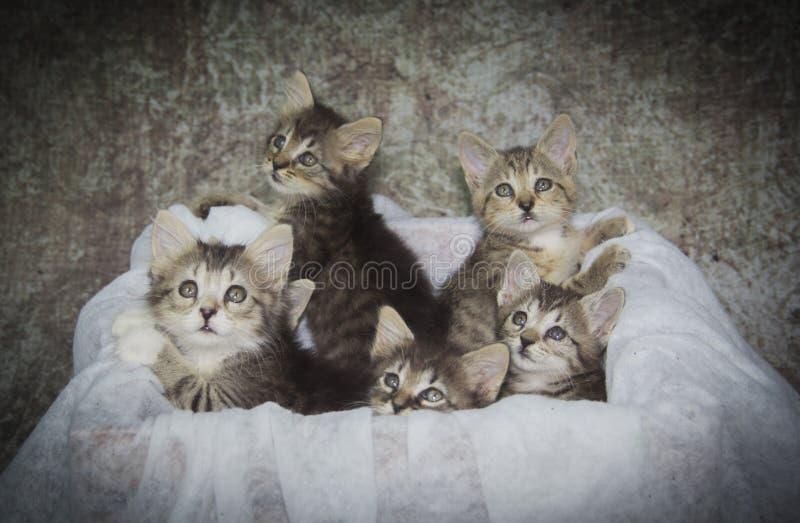 Caixa completamente dos gatinhos imagens de stock