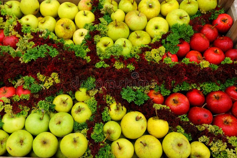 Caixa de maçãs foto de stock royalty free