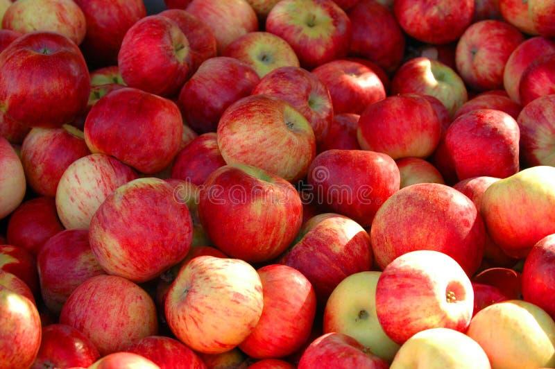 Caixa de maçãs fotografia de stock royalty free