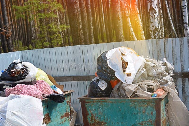 Caixa de maca completamente do lixo no conceito da floresta do problema da ecologia imagens de stock