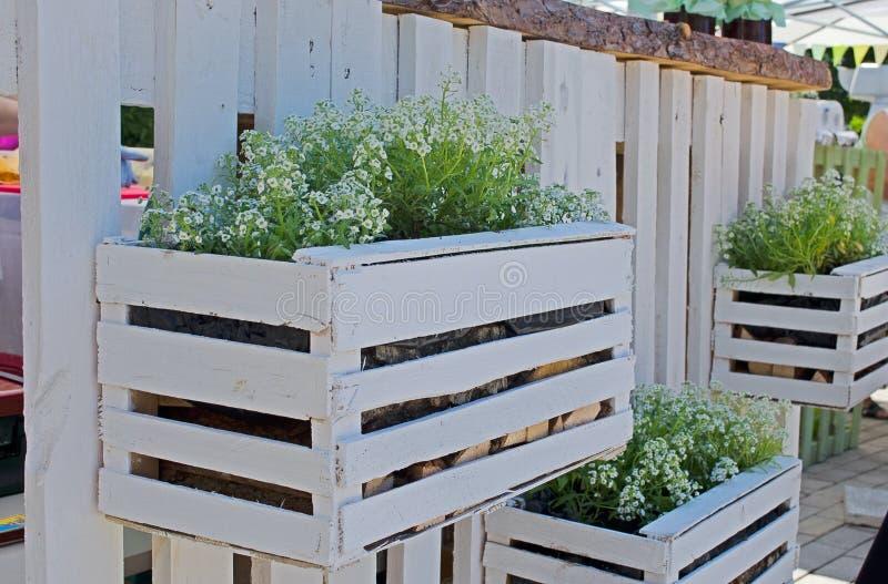 Caixa de madeira branca da flor com flores brancas fotografia de stock royalty free