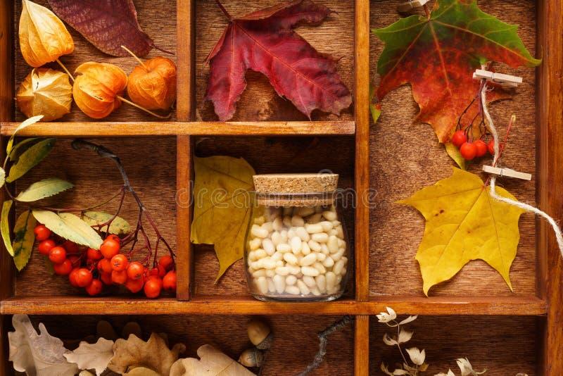 Caixa de madeira com as várias folhas, as porcas e as bagas vermelhas e amarelas fotografia de stock royalty free
