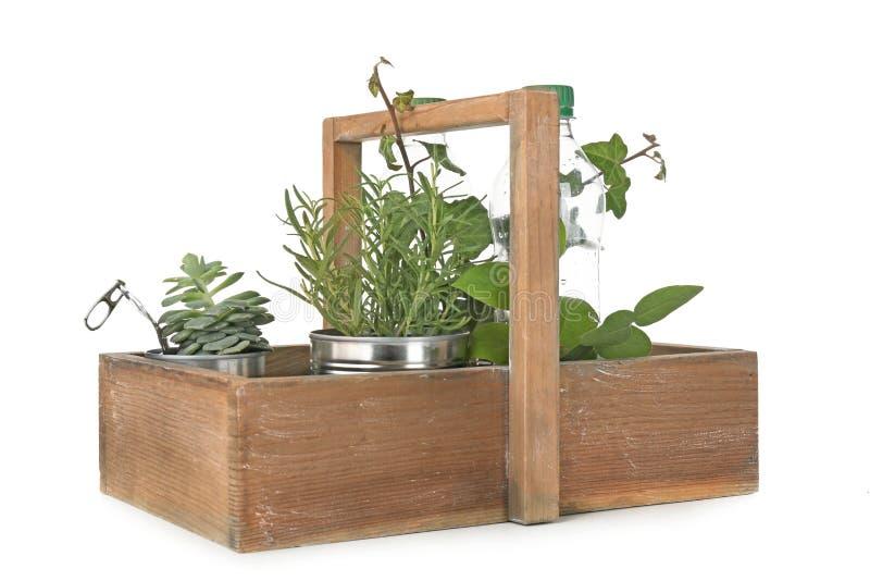 Caixa de madeira com latas de alumínio e as garrafas plásticas usadas como recipientes para plantas crescentes imagens de stock