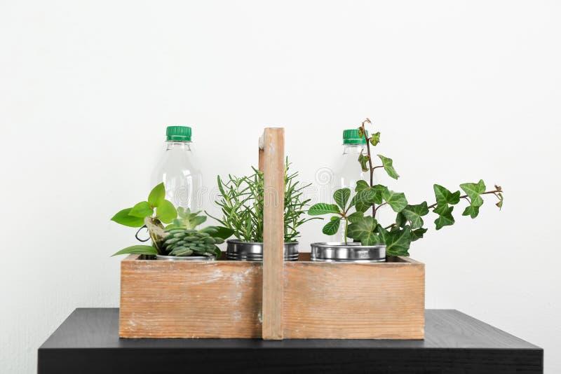 Caixa de madeira com latas de alumínio e as garrafas plásticas usadas como recipientes para plantas crescentes, foto de stock royalty free
