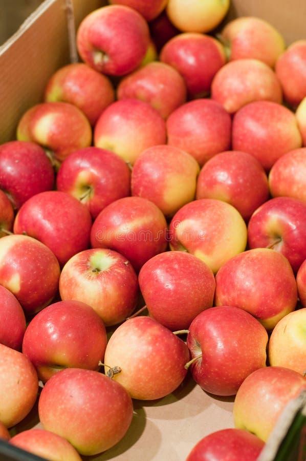 Caixa de Papper que contém maçãs vermelhas foto de stock royalty free
