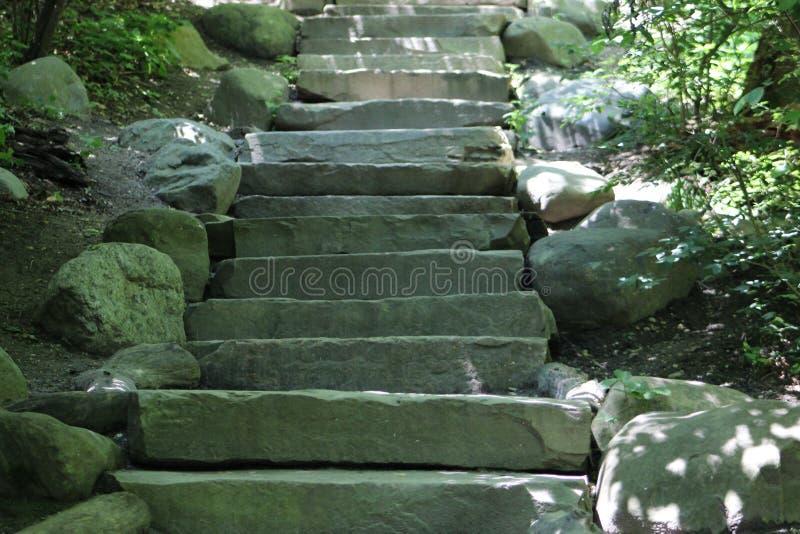 Caixa de pedra da escada com arbustos verdes de cada lado fotografia de stock