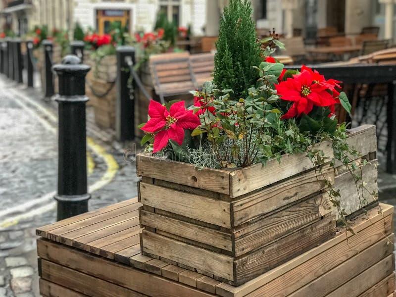 Caixa em Covent Garden, Londres da poinsétia, Reino Unido fotografia de stock