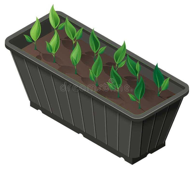 Caixa isométrica com os tiros das plantas verdes das plântulas ilustração do vetor