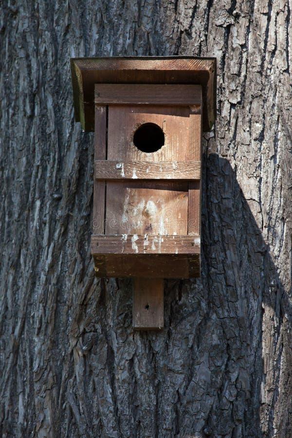 Caixa-ninha em uma árvore fotos de stock royalty free