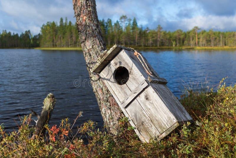 Caixa-ninha velha do pássaro que inclina-se contra um pinheiro pequeno imagem de stock