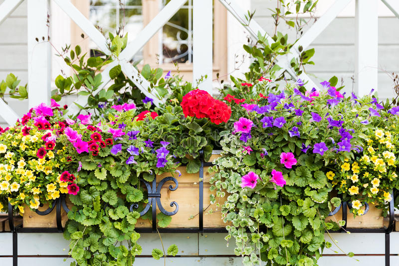 caixas da flor na frente da casa imagens de stock royalty free