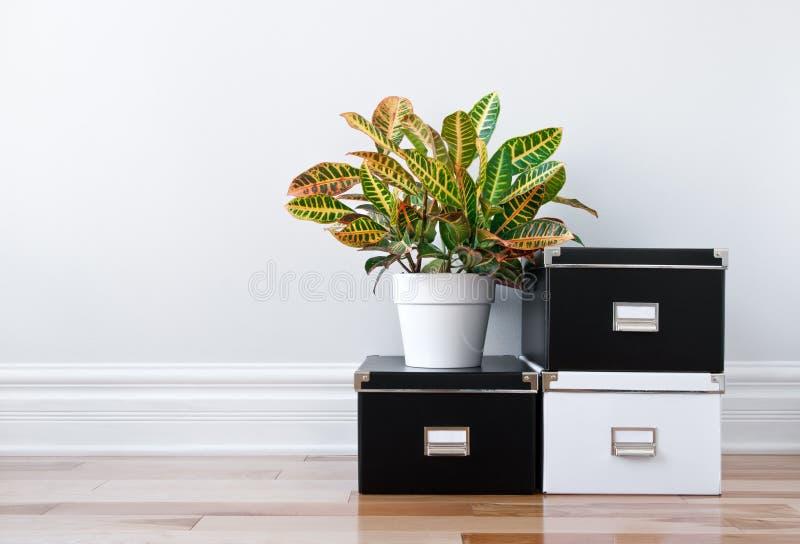 Caixas de armazenamento e planta verde em um quarto imagens de stock royalty free