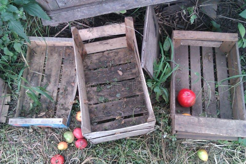 caixas de madeira e maçãs vazias na grama imagens de stock royalty free