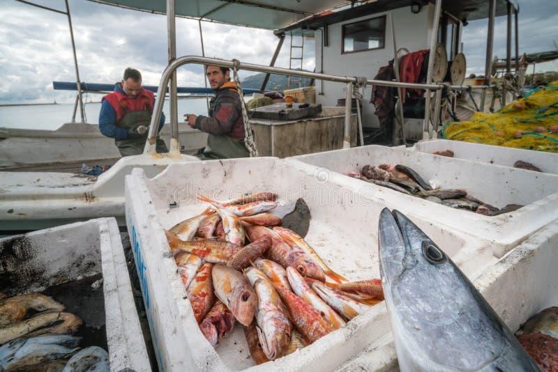 Caixas de peixes recentemente travados em um barco dos pescadores fotos de stock royalty free