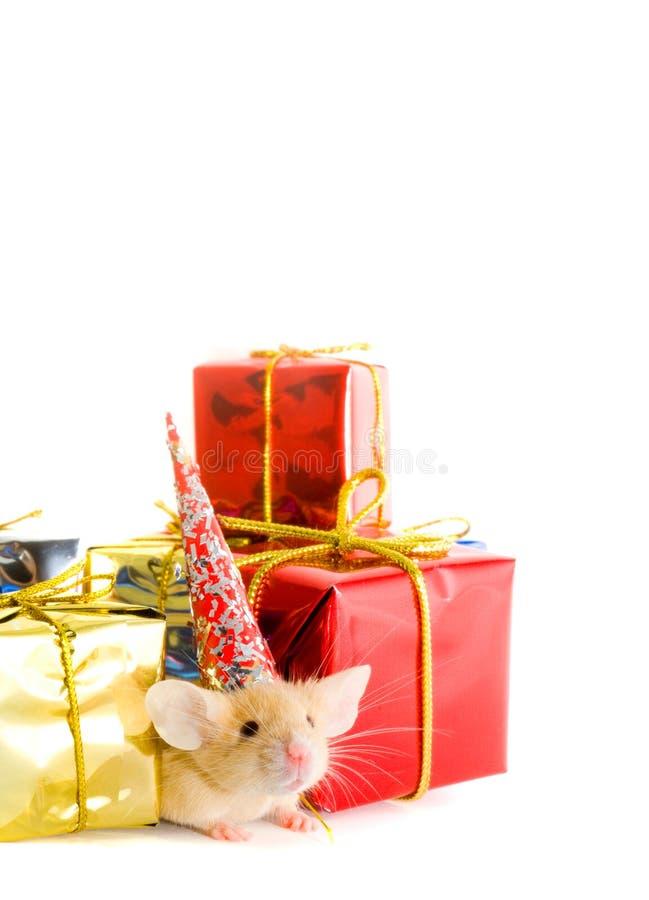 Caixas dos presentes e mousy fotografia de stock