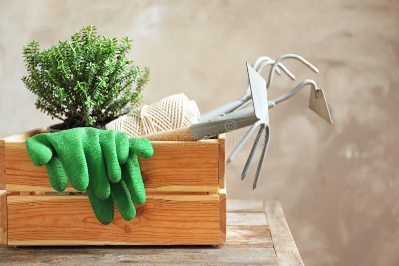 Cajón de madera con la planta y las herramientas que cultivan un huerto profesionales fotos de archivo