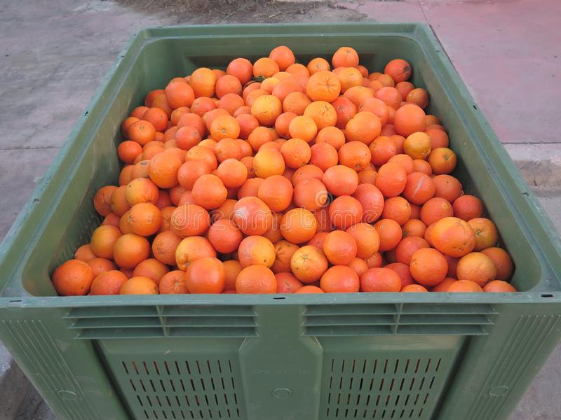 Cajón grande de naranjas en estado comercial andaluz fotos de archivo libres de regalías