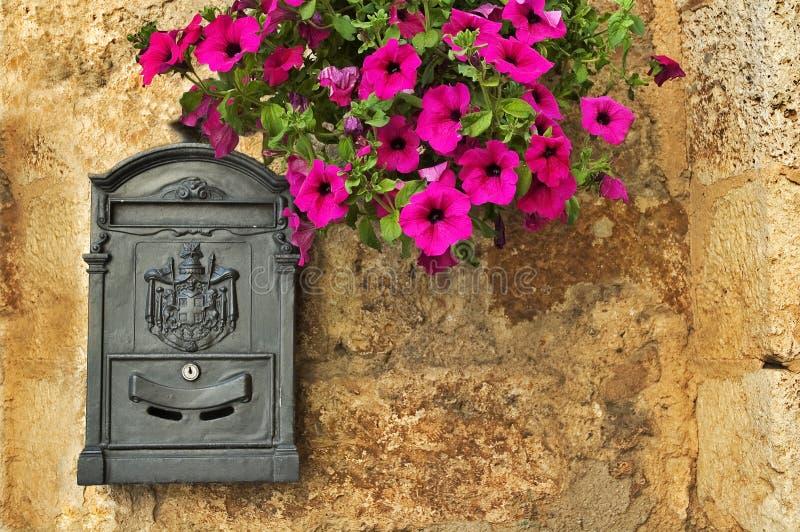 Caja con la petunia imagen de archivo
