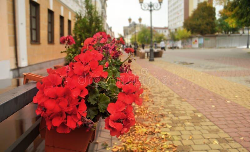 Caja con las flores rojas cerca de la pared de la casa en la calle de la ciudad del otoño imágenes de archivo libres de regalías