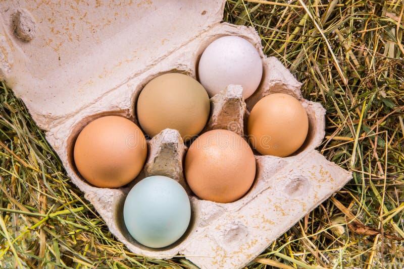 Caja de cartón con los huevos en diversos colores y tamaños fotografía de archivo