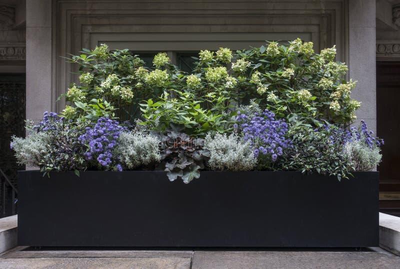 Caja del plantador con las flores púrpuras, blancas, y verdes en New York City foto de archivo libre de regalías