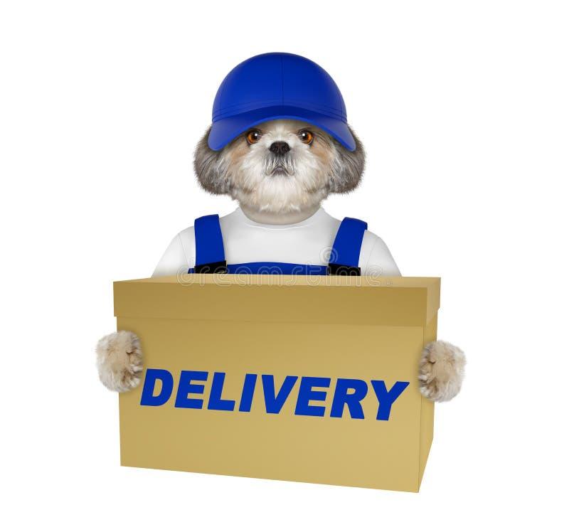 Caja linda de los posts del amarillo de la entrega del perro -- aislado en blanco imagen de archivo