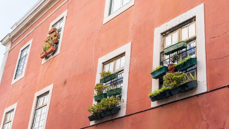 Cajas de la flor y de la planta de la ventana, plantas de tiesto Edificio rojo viejo, marcos de ventana blancos foto de archivo