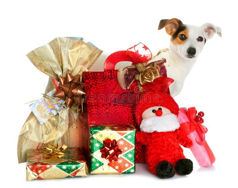 Cajas de regalo con el pequeño perro lindo foto de archivo libre de regalías