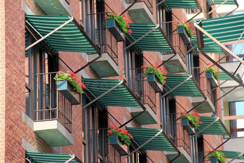 Cajas de ventana con las flores coloridas imagen de archivo libre de regalías