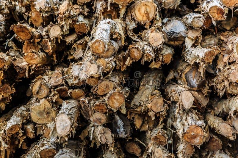 Cajeputier, madeira no delta de Mekong, Vietname dos manguezais fotografia de stock